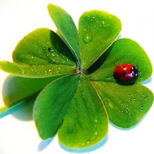 Изтеглете си късметчето за днес! Предстои ви нещо хубаво!