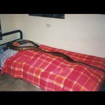 Тази жена спала с питон всяка вечер, но тогава ветеринарният лекар казал нещо, което я шокирало