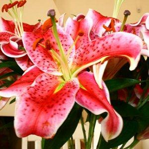 За да ви виреят цветята Ви трябва подходяща светлина