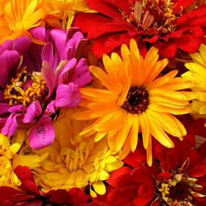 Грижа за цветята през септември