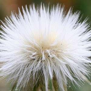 Ефикасни билки за бърз метаболизъм