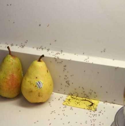 Средства срещу мравки - 16 начина да се справим у дома
