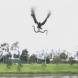 Орел от небето им хвърли змия докато правеха скара