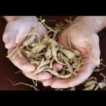 Известна билкарка: Ако не искате да боледувате целогодишно са ви нужни само тези 3 корена!