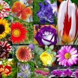 Всяка зодия има цвете-талисман, което трябва да си гледате вкъщи, за да ви пази. Ето кое е вашето