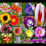 Всяка зодия има цвете-талисман. Проверете кое е вашето