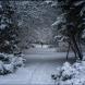 Синоптик от НИМХ разкри, дали ще има сняг за Коледа