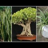 3 растения, които генерират кислород дори и през нощта- перфектните чистачи за спалнята ви! Ще спите като къпани!