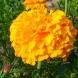 Цветето, което спаси хиляди жени от кисти, миоми  и стерилитет- неговите лечебни свойства са прочути дори сред лекарите