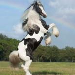 За тези породи коне едва ли някога сте чували и виждали. Определено ще ви оставят без думи (снимки)