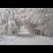 Идва зима с много сняг и студ чак до средата на февруари!
