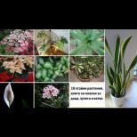 Това са 10-те най- опасни растения за децата и домашните любимци. Помислете пак преди да ги оставите вкъщи (снимки)
