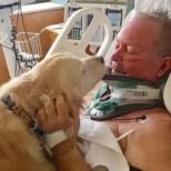 Куче спаси живота на стопанина си като лежа 24 часа върху него и го предпази от измръзване