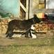 Изроди изтребват домашните кучета в Сапарева баня