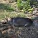 Масова смърт на животни в парка до стадион \