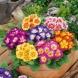 Тайната съставка, с която цветарите поддържат толкова дълго време свежи и красиви цветята си