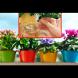 Домашните цветя ще се превърнат в буйна гора с тази проста съставка! Всички ще ви питат, какво толкова слагате!