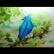 Този тест направо ме разби! Синята птица откри за мен много неща, които не съм подозирала!
