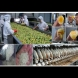 8 китайски храни, които са изключително токсични, но малцина знаят, че много от тях са даже незаконни (снимки)