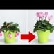 """3 съставки, които имат силата да """"съживят"""" увехналото цвете"""