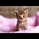 Казват, че котките виждат злите духове в къщата - ето какво става поведението им!