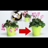 3 съставки, които ще върнат към живот любимото Ви цвете!