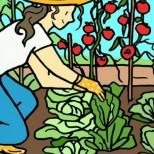 Ето защо всеки градинар трябва да се засади чесън близо рози!