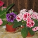 Най- вкусната подправка пази цветята ми от мравки, болести, мухъл и им помага да растат и цъфтят постоянно