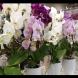 Жена, която се занимава с орхидеи от 13 години, ми сподели тайната на лесното разсаждане