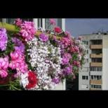 Подхранвайте растенията си вкъщи с тези подправки и ще имате разкошна домашна градинка, а съседките ще завиждат ли завиждат!