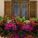С какво да поливате цветята си, за да растат и цъфтят целогодишно, знаете ли тези трикове ще имате божествена градинка