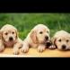 10 имена за кучета, които носят късмет!