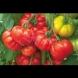 Ето как да изкарате ранни домати още май месец без оранжерии и разсад