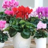 Тези стайни растения са най- добрите лечители, които може да имате вкъщи. Тяхната мощна сила цери всичко