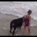Момиче отива към голяма беда, но вижте какво направи кучето, за да я спаси!