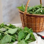 Най- добрите билки за бързо отслабване и пречистване на тялото