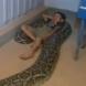 Като бебе спеше с змията, а сега 11 години по-късно се случи това