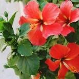 Хороскоп на щастливите растения за всяка зодия-Те ще ви донесат късмет!