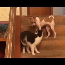 Строга котка плясна шамар на палаво куче и съвсем се \