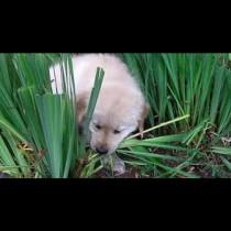 Чудите се защо кучето ви яде трева? Ето основните причини