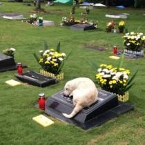 Снимката със скърбящо куче трогна всички