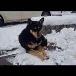 Помните ли историята за Хачико-Е, и в България има едно такова куче-Вижте го!