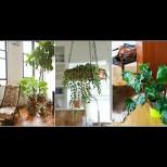 Украсяват дома, но крият огромни опасности за здравето! Бързо се избавете от тези цветя