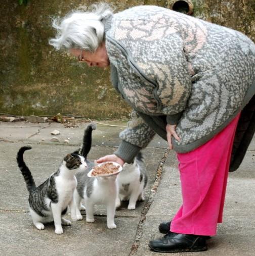Луд късмет ви чака през новата година, ако сте нахранили котка!