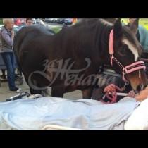 Трогателна история-Пациентка, болна от рак си взима последно сбогом с любимия си кон