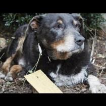 Когато най-после намериха кучето си, те откриха необичайна бележка на нашийника му-Ето какво пишеше в нея