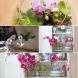 Реших да пресадя орхидеите по необичаен начин ... Когато гостите видяха моите красавици, ахнаха!