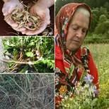 Известната билкарка, баба Елена казва: Всички плевели лекуват-Не искате нищо да ви боли-изкопайте три корена, направете отвара