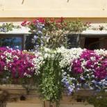 Как да засадим петунии у дома-Добавям една или две таблетки от това, затягам бутилката и готово