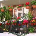 10 трика, с които растенията ви вкъщи ще растат и цъфтят целогодишно